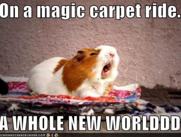 This looks like my old Guinea Pig Jelly Bean!