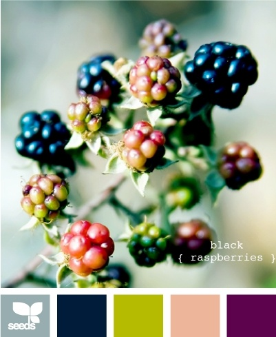 black raspberries, no pink but it's got the navy blue seat color, limey green and even the plum.  I like that steel blue.
