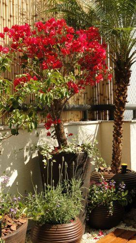 Para essa varanda, a paisagista Ivani Kubo procurou aproveitar-se da beleza da primavera (Bougainvillea spectabilis) e do perfume da lavanda (Lavandula angustifolia) plantadas em vasos. A lavanda aprecia ambientes ensolarados, mas protegidos do vento e o plantio deve ocorrer em solo poroso com boa drenagem e rico em húmus. Quando cultivada em vaso, a lavanda não deve ser misturada com outra planta