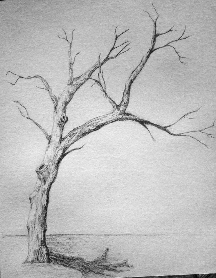 tree drawings pencil