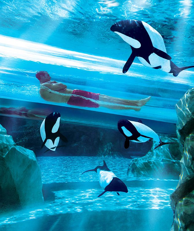 The Dolphin Plunge, Sea World, Orlando, Florida: