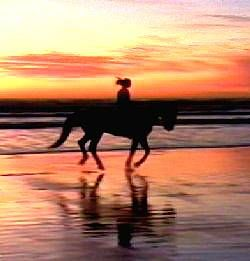 ride a horse on the beach at sunset! How amazing and fun would that be!