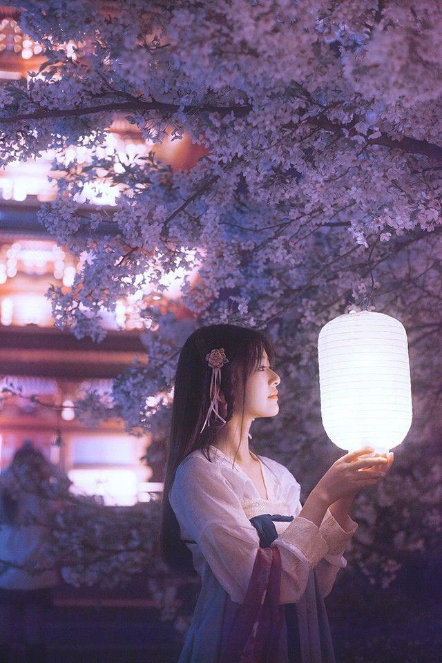 Lantern cherry blossom