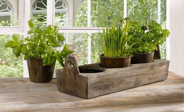 Картинки по запросу 9 съедобных растений, которые можно вырастить на подоконнике