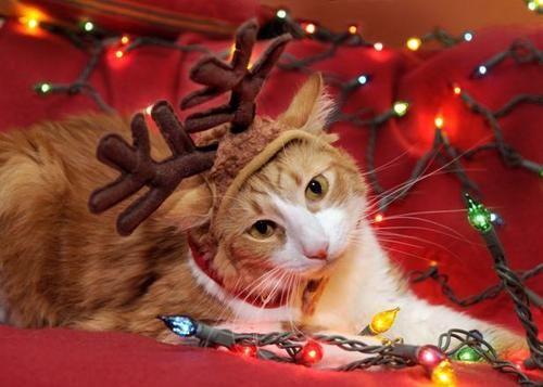 gato reno luces navidad