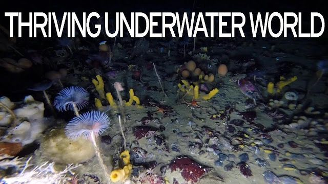 AWAKENING FOR ALL: Rare Glimpse Into ANTARCTICA''s Colorful Underwate...