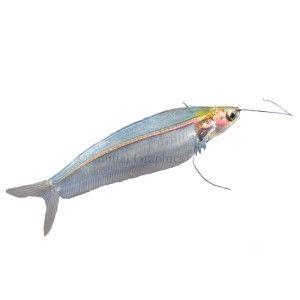 17 best images about aquariums on pinterest live fish for Petsmart fish guarantee