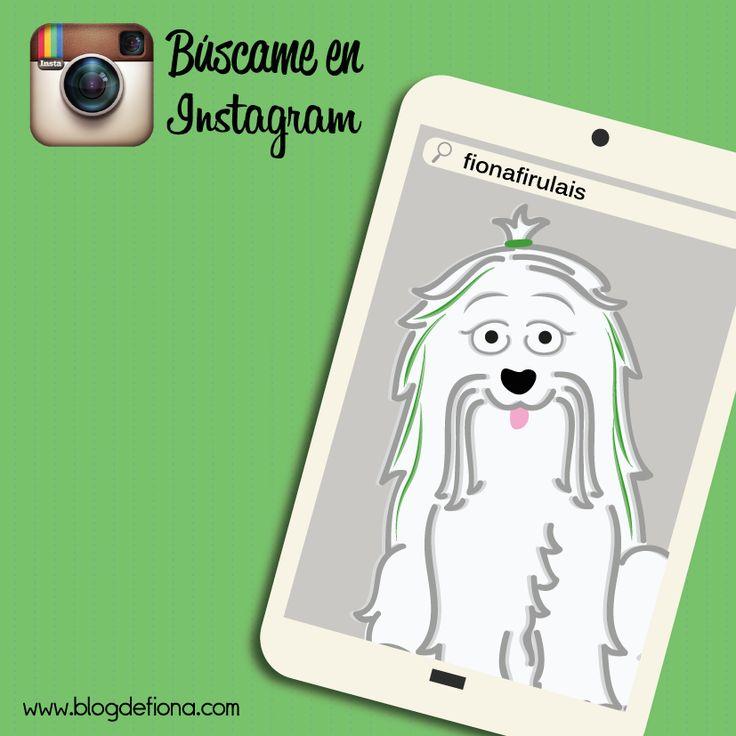 ¿Quiero saber cuántos me siguen en Instagram? Tengo fotos divertidas para mostrarte, búscame como #fionafirulais. http://instagram.com/fionafirulais ¡Muchos saludos! #Fiona <3 <3 <3