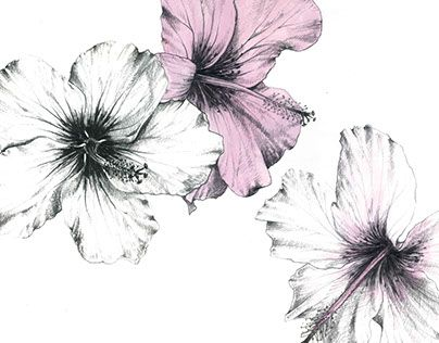 """soft pink hibiscus flowers illustration. Check out new work on my @Behance portfolio: """"Petals"""" http://be.net/gallery/58206975/Petals"""