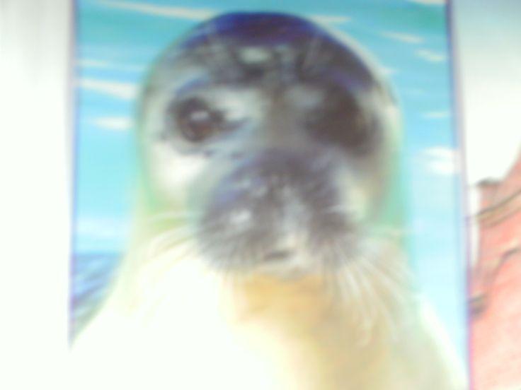 Ekomare het zeehonden verblijf