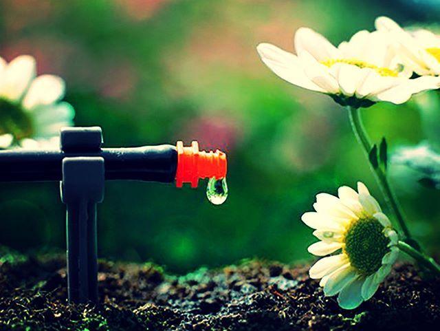 Instalujesz nawadnianie kropelkowe i ogród podlewa się sam - ogarniasz? #nawadnianiekropelkowe #Gardena #Kosiarka_pl #ogarnijogród