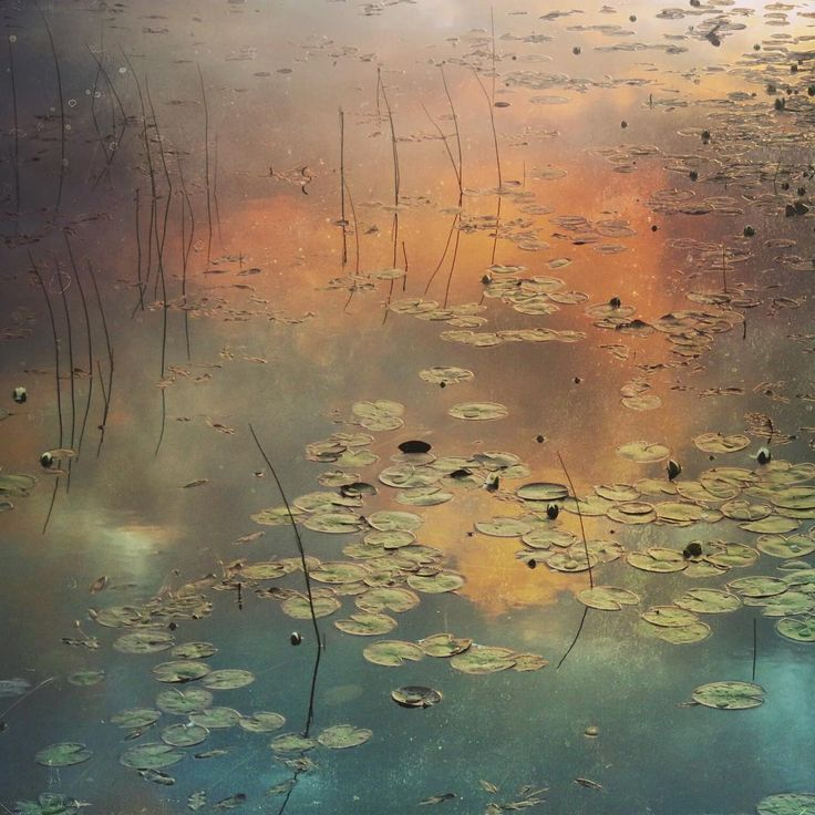 """""""Mi piace"""": 26, commenti: 8 - I am aKath from an isle (@island_kath) su Instagram: """"One can do something if one can see and understand it... ~Claude Monet~  #waterlily #lilypond…"""""""