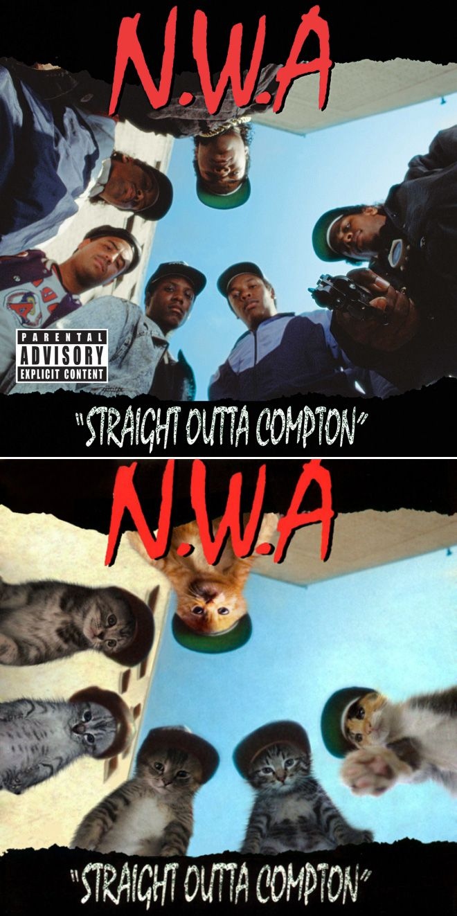 Iconic Album Covers Recreated With Kittens In 2020 Iconic Album Covers Album Covers Music Album Covers