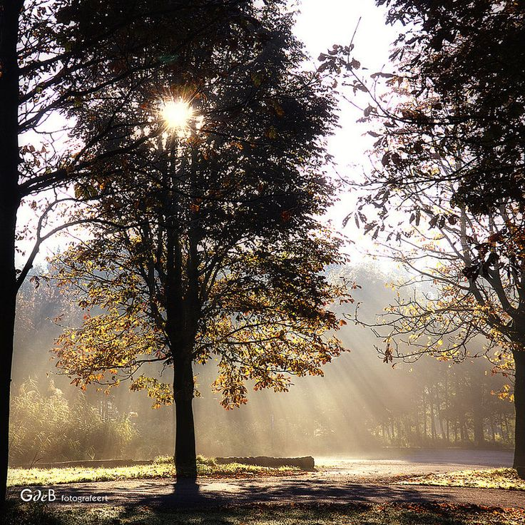 autumn sun and fog