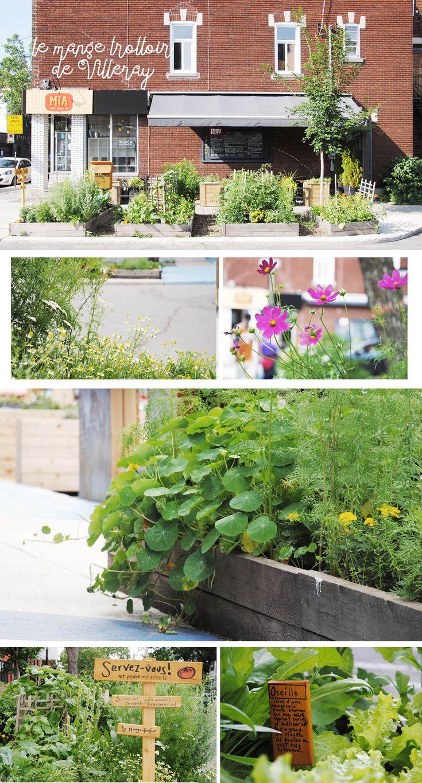 Mange-trottoir - Villeray - Montréal  Espace public - Agriculture Urbaine - Mange trottoir