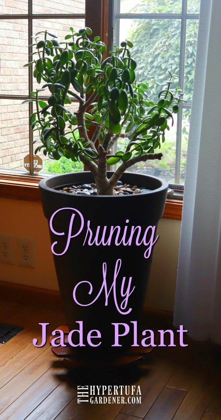 Pin On Indoor Gardening