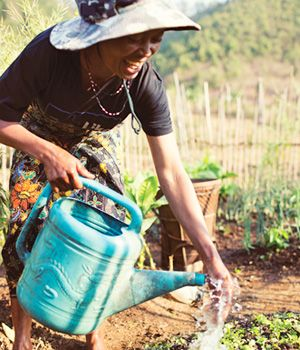'Small-Scale Irrigation' - Useful Gifts by TEAR Australia: Go with the flow. For farmers, water is not just for drinking, but is needed to grow healthy and productive crops. This gift contributes to smallscale irrigation projects that help generate food and income for communities.