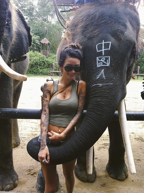 elephant fuck a girl pic