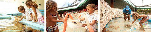 Curacao Sea Aquarium - Meet Our Marine Life