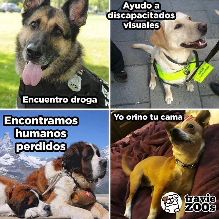 Basicamente Eso Es Lo Que Hace Tu Perro Perros Graciosos Memes Perros Perros Chistosos