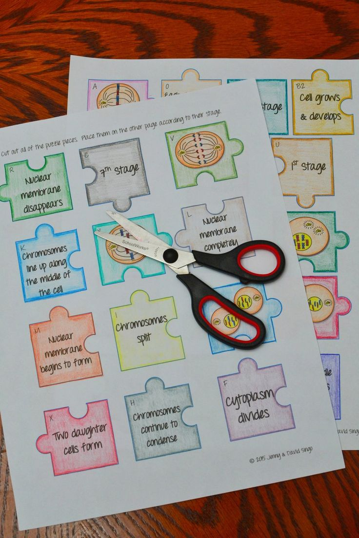 Mitosis Puzzle Activity in 2020 | Teaching biology ...