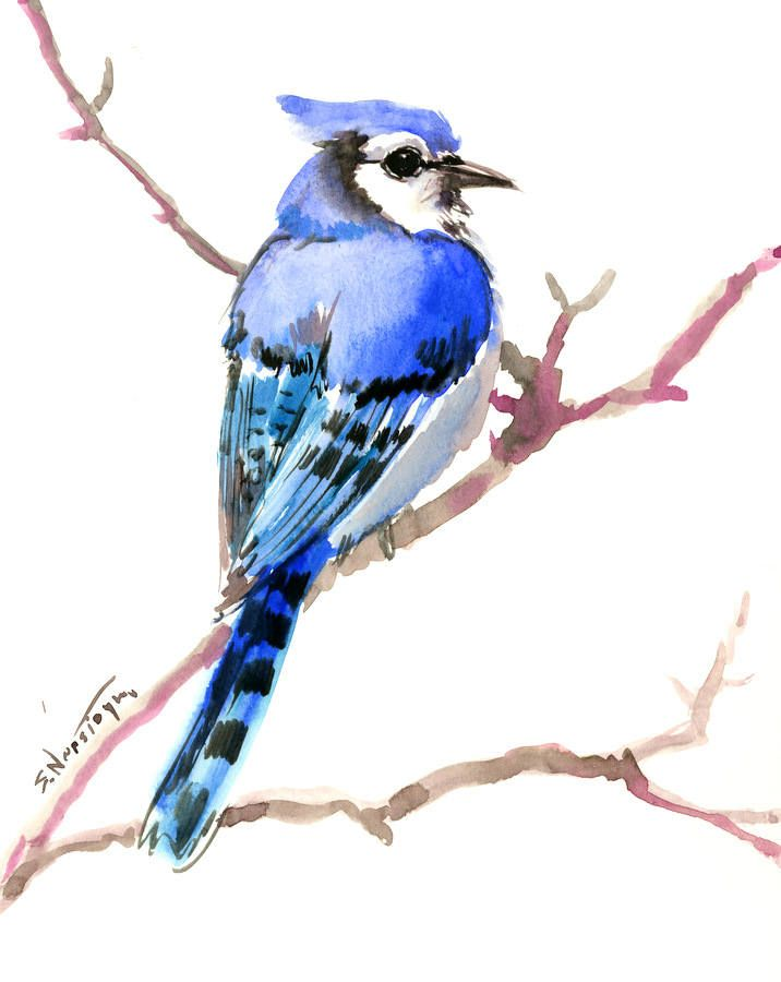 Blue Jay, original, one of a kind watercolor painting, bird artwork 10 x 8 in by ORIGINALONLY on Etsy