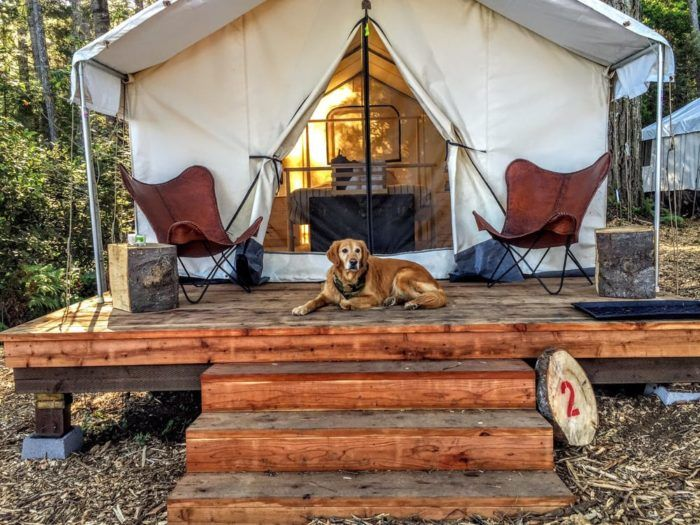 """The fancy campground lets guests rent out their tent cabins, which they call """"safari tents."""" These cozy abodes have fabric walls and  are housed on wooden platforms, giving you that perfect balance of nature and comfort."""