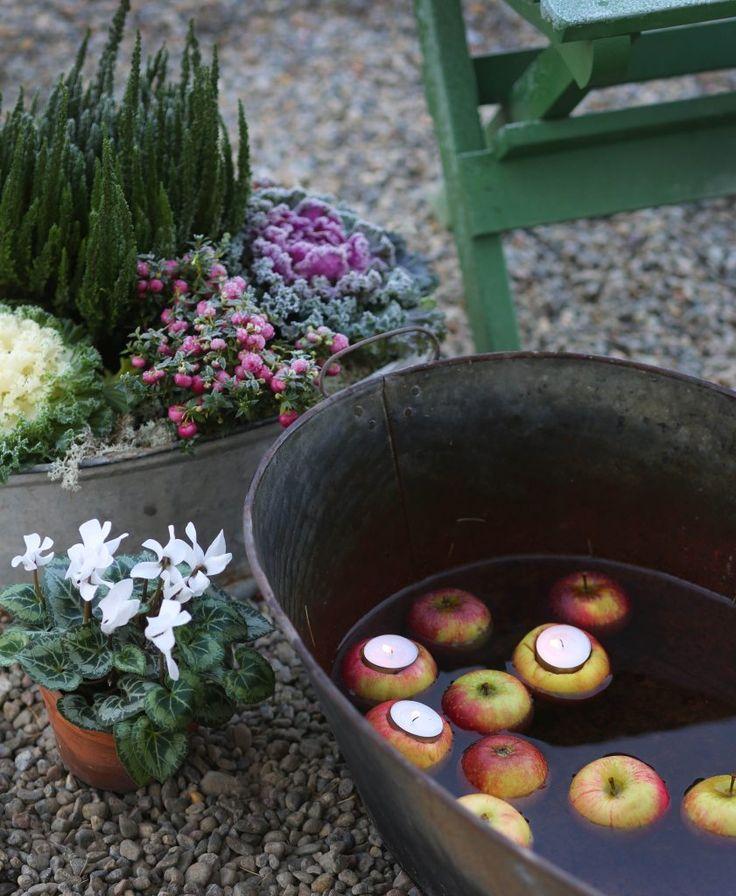 Höstplantering // Fall decoration. Apple lantern