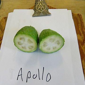 Feijoa Apollo, mid season