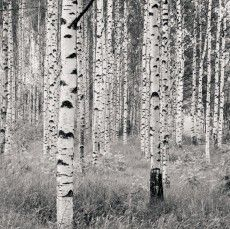 FotobehangFactory Fotobehang Woods 2
