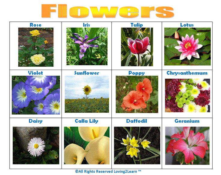 names of flowers trees and plants