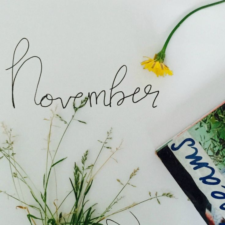 My November goals are up on the blog!!  Hello lovelies! I apologise for how quiet it's been lately. I'd like to share what's been going on lately: I've been having a bit of a tough time personally, I've just…