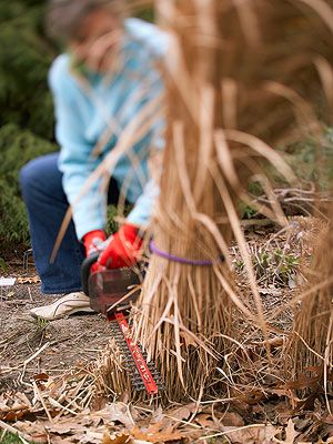 Keeping Ornamental Grasses Happy - Leave the standing in Winter, cut them back in early Spring.