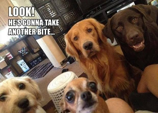 Previous Pinner Said: Poor doggies.. I say: I recognize this look, and I realize that I HAVE to share!!