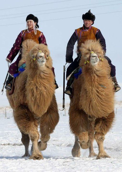 Camel riders in the Gobi desert.