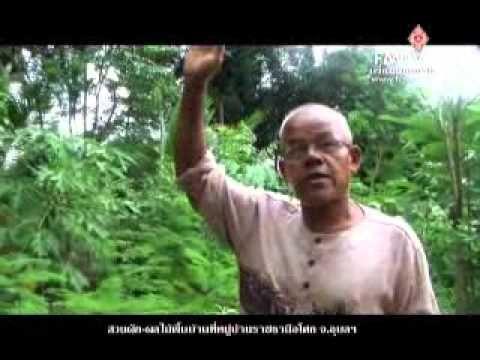 คนเพื่อแผ่นดิน สวนผัก 100 ปี - YouTube