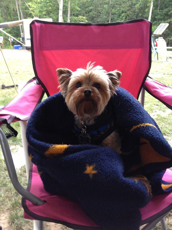 Camping Yorkie