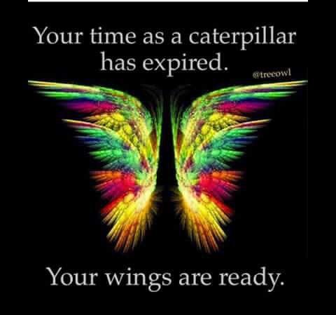cff56003e19e636f4a402ebfc08c350e--butterfly-wings-angels.jpg