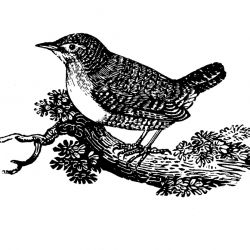 A collection of bird themed FREE images to use in any and all craft projects!