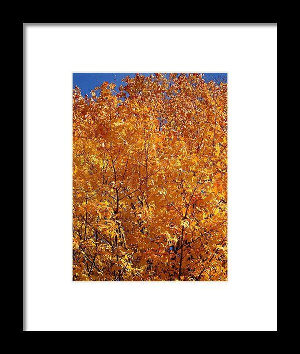 orange, leaves, autumn, fall, foliage, tree, toledo, ohio, wildwood park, landscape, nature, michiale schneider photography