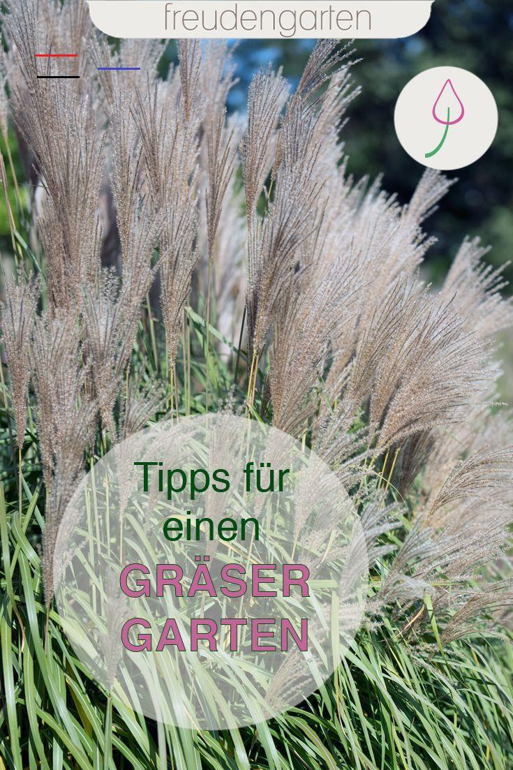 Ziergraser Fur Den Garten Blumenbeetanlegen Das Passende Ziergras Finden Sowie Tipps Zum Pflanzen Pfl In 2020 Ornamental Grasses Diy Lawn Garden Landscape Design