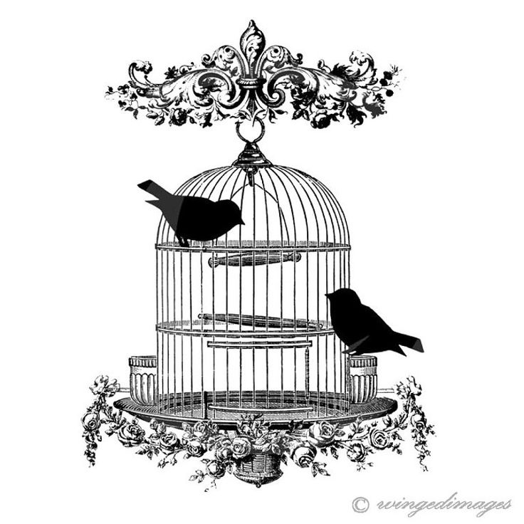 Vintage Bird Cage Instant Download Digital Image No.52 Iron-On Transfer to…