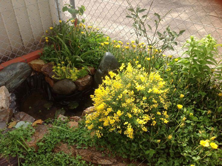 窒素固定性植物∞ナイトロジェンフィキサー – じゅん君の目からウロコのパーマカルチャー塾