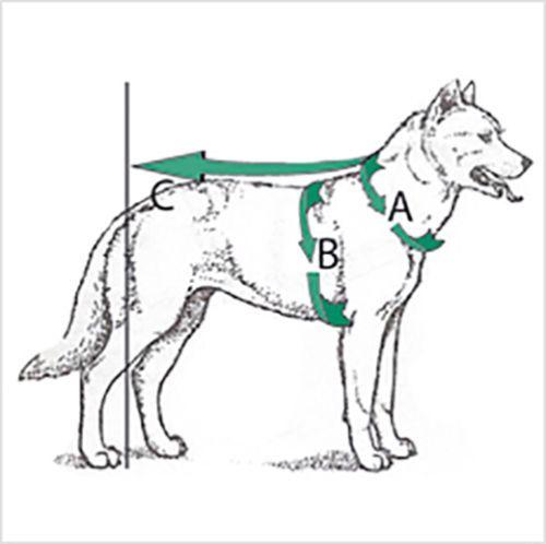 Trail Dog Harness