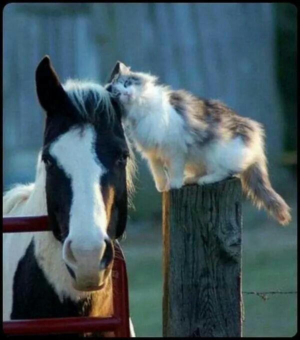 amitié cheval et chat #adorable