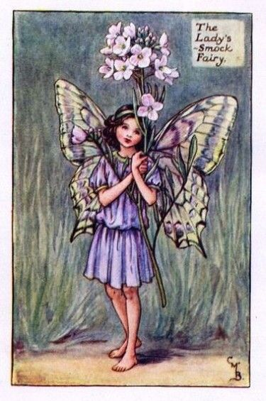 Ladys-Smock Flower Fairy Vintage Print by Cicely Mary Barker. first published in London by Blackie, 1923 in Flower Fairies of the Spring.