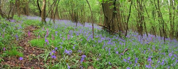 Folly Farm  2 hours  http://www.avonwildlifetrust.org.uk/documents/reserve_walks/Walk-Folly_Farm.pdf