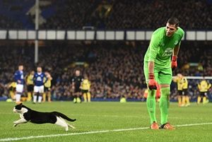 Everton goalkeeper Joel Robles attempts to catch a cat during the FA Cup third-round football match between Everton and Dagenham & Redbridge at Goodison Park.