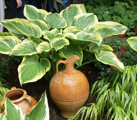 7 besten Giant Hosta Clumps! Bilder auf Pinterest | Hosta gärten ...