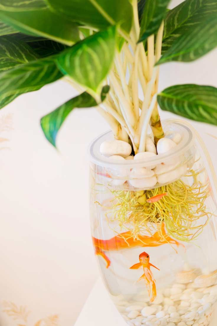 Flower vase with fish - How To Make Your Own Little Home Aquaponics Set Up